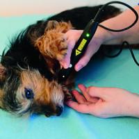 Laser- Akupunktur eines Yorkshire Terriers